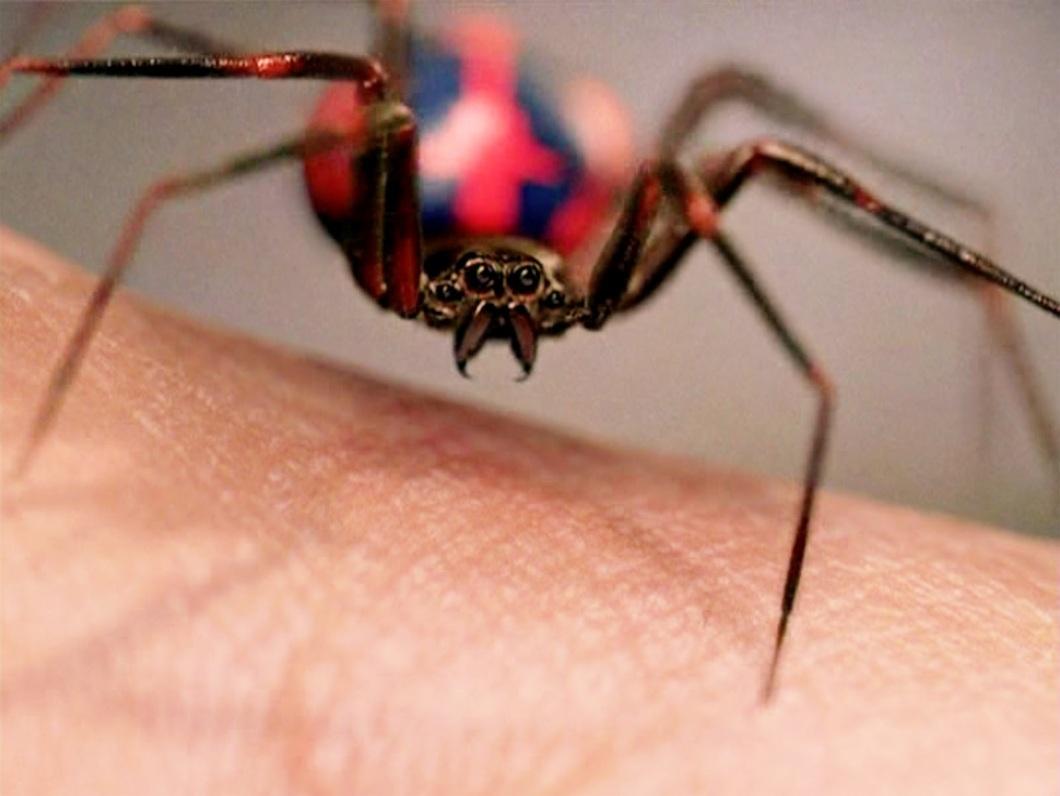 Spider-Man_033Pyxurz.jpg